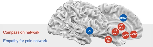 Brain - Empathy and Compassion networks